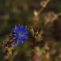 осенние цветы :: Екатерина Агаркова