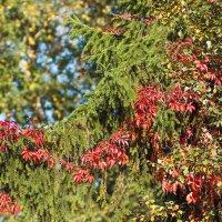 Осенняя гирлянда :: Виталий