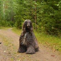В лесу :: Caren Yvonne Rikkilä