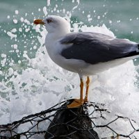 Чайка и море :: Alexander Andronik