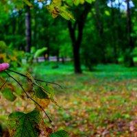 Fall :: Роман Никитин