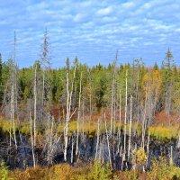 Осень на болотах :: Ольга