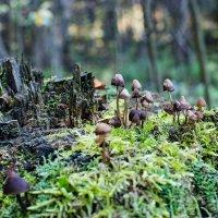 Прогулка по осеннему лесу :: Влад Поляков