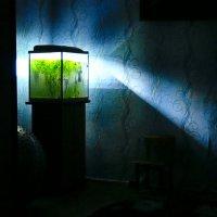 аквариум !!!! :: Василий Щербаков
