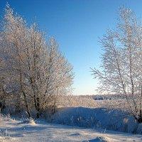 До зимы осталось недолго... :: оля san-alondra