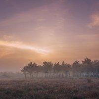 Доброе утро, лес! :: Алина Шостик