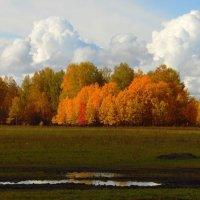 А лес,что терем расписной ! :: nadyasilyuk Вознюк