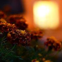 Цветы ночного города :: Сергей Землянский