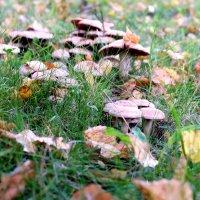 Грибы, грибочки :: Ольга Васильева