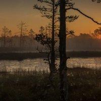 На болотах... :: Anna Leshtshenko