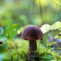 Гриб-грибочек :: Inga Engel
