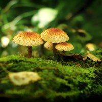 Осенний лес :: Екатерррина Полунина