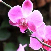 Орхидея :: Fiodor