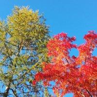 Яркие краски осени :: BoxerMak Mak