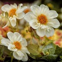 Поздние цветы. :: D. Matyushin.