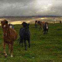 Табун лошадей на закате дня :: Shapiro Svetlana