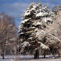 После снегопада :: Виктор Х.