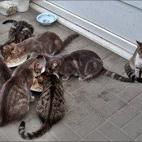 Из жизни местных кошек :: Нина Корешкова