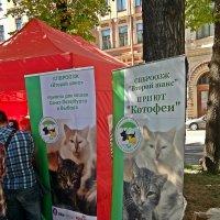 Каждой кошке по приюту) :: Виктор Егорович