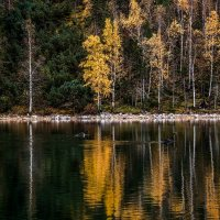 Чёрные лебеди на Изумрудном озере. :: Rafael