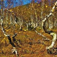 Пляшущий лес :: Сергей Чиняев