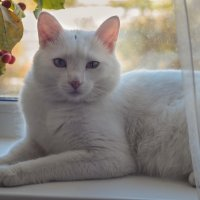 Белый кот :: Елена Ел