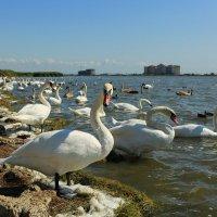 Лебяжье озеро,Крым :: ninell nikitina