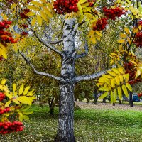 В парке :: Viacheslav Birukov