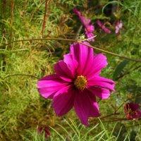 И в октябре цветы  цветут... :: Galina Dzubina