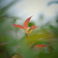 Восеньскія фарбы :: John Smith