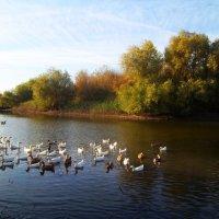 Утки на реке :: Татьяна Королёва