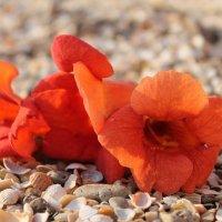 Цветы на пляже :: Александр Казаков