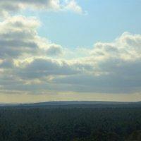 Лес как зеленый ковер. :: Andrey Koleda