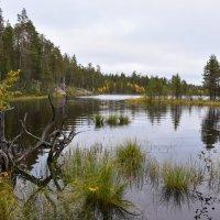 Осень в Карелии :: Кирилл Седов