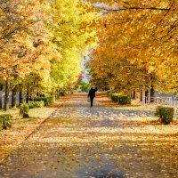Осень :: Алексей Сопельняк