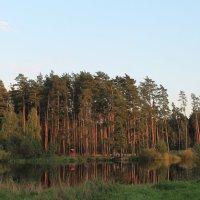Сосновый лес :: Александр Казаков