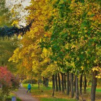 Палитра Золотой осени... :: Sergey Gordoff
