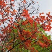 рисует осень :: tgtyjdrf