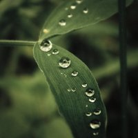 После дождя... :: Елена Михайлова .