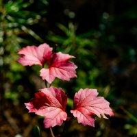 Красные листья. :: Анатолий Стафичук