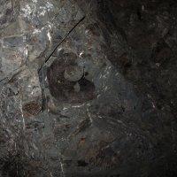 отпечаток древней улитки амонита :: Елена