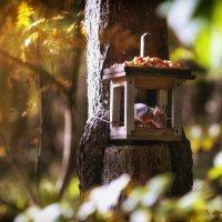 в лесу :: Эльмира Суворова