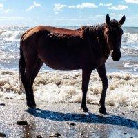 Абхазская лошадка :: Надежда Орёл