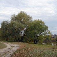 Осенний день. :: Чария Зоя