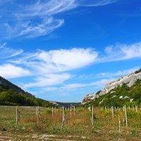 одичавший виноградник :: Андрей Козлов