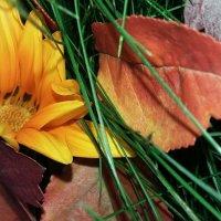 Яркий октябрь :: Lilek Pogorelova