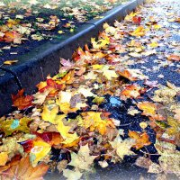 """Осенний """" ковер """". :: Марина Харченкова"""