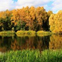 Осень в Ботаническпм саду. (3) :: Николай Кондаков