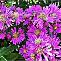 Цветы осенние. :: Валерия Комова