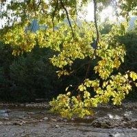 Игра солнца в листьях. Гуамское ущелье :: Gal` ka